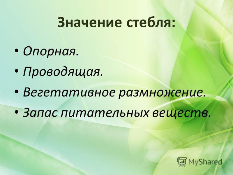 Значение стебля: Опорная. Проводящая. Вегетативное размножение. Запас питательных веществ.