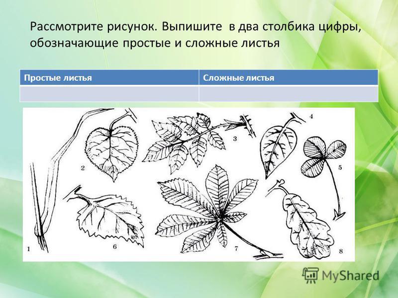 Рассмотрите рисунок. Выпишите в два столбика цифры, обозначающие простые и сложные листья Простые листья Сложные листья