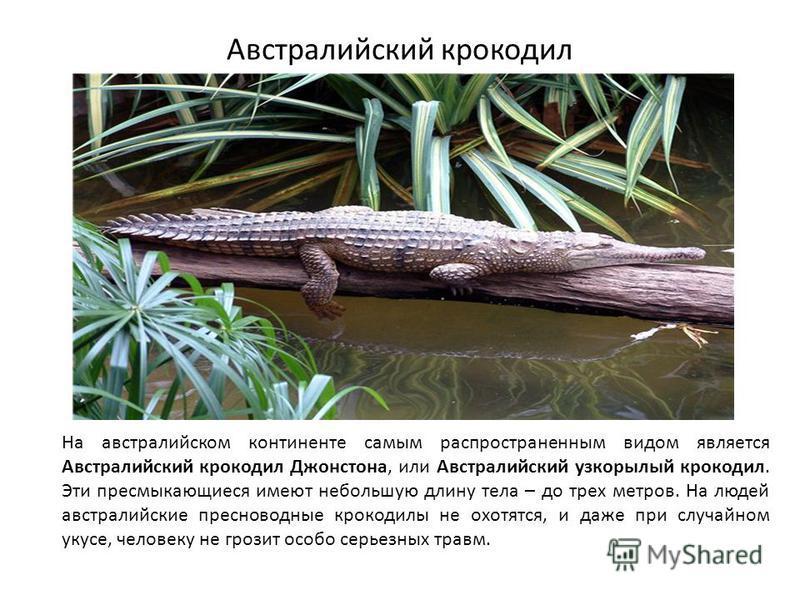 Австралийский крокодил На австралийском континенте самым распространенным видом является Австралийский крокодил Джонстона, или Австралийский узкорылый крокодил. Эти пресмыкающиеся имеют небольшую длину тела – до трех метров. На людей австралийские пр