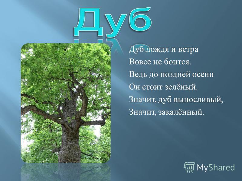 Дуб дождя и ветра Вовсе не боится. Ведь до поздней осени Он стоит зелёный. Значит, дуб выносливый, Значит, закалённый.