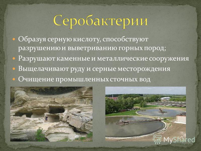 Образуя серную кислоту, способствуют разрушению и выветриванию горных пород; Разрушают каменные и металлические сооружения Выщелачивают руду и серные месторождения Очищение промышленных сточных вод