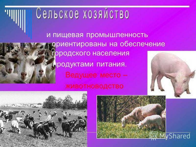 и пищевая промышленность ориентированы на обеспечение городского населения продуктами питания. Ведущее место – животноводство