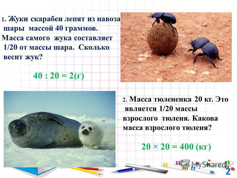 40 : 20 = 2(г) 1. Жуки скарабеи лепят из навоза шары массой 40 граммов. Масса самого жука составляет 1/20 от массы шара. Сколько весит жук? 20 × 20 = 400 (кг) 2. Масса тюлененка 20 кг. Это является 1/20 массы взрослого тюленя. Какова масса взрослого