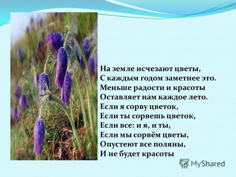 На земле исчезают цветы, С каждым годом заметнее это. Меньше радости и красоты Оставляет нам каждое лето. Если я сорву цветок, Если ты сорвешь цветок, Если все: и я, и ты, Если мы сорвём цветы, Опустеют все поляны, И не будет красоты