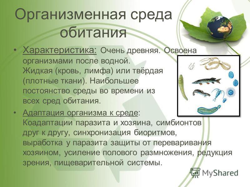 Организменная среда обитания Характеристика: Очень древняя. Освоена организмами после водной. Жидкая (кровь, лимфа) или твёрдая (плотные ткани). Наибольшее постоянство среды во времени из всех сред обитания. Адаптация организма к среде: Коадаптации п