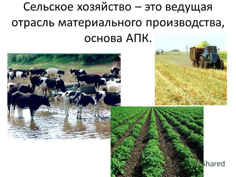 Сельское хозяйство – это ведущая отрасль материального производства, основа АПК.