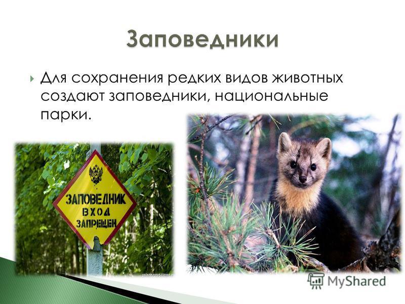 Для сохранения редких видов животных создают заповедники, национальные парки.