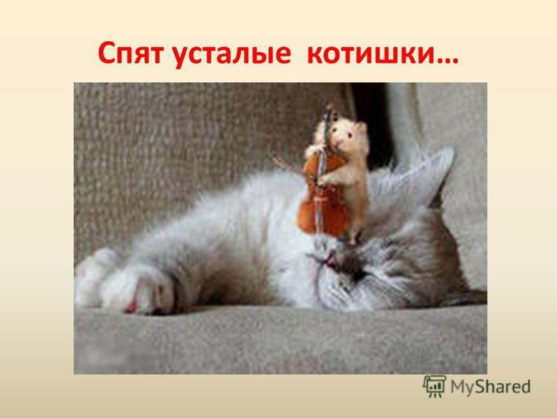 Спят усталые котишки…