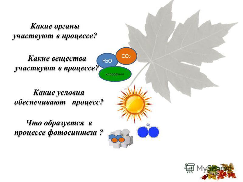 Какие органы участвуют в процессе? Какие вещества участвуют в процессе? Какие условия обеспечивают процесс? Что образуется в процессе фотосинтеза ? Н2ОН2О хлорофилл СО 2