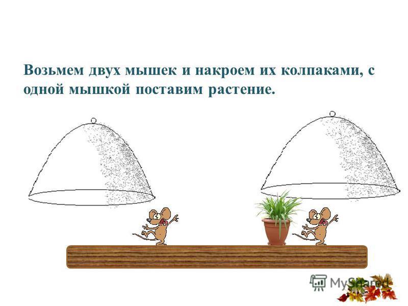 Возьмем двух мышек и накроем их колпаками, с одной мышкой поставим растение.