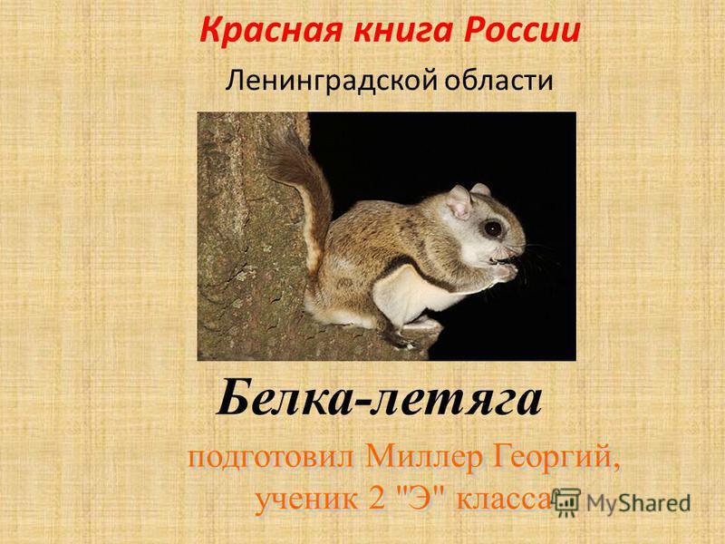 Белка-летяга Красная книга России Ленинградской области
