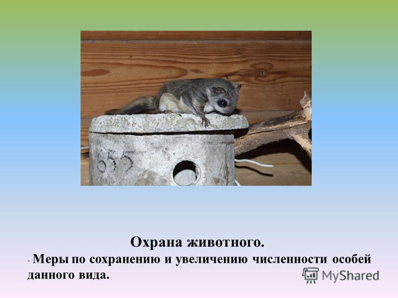 Охрана животного. - Меры по сохранению и увеличению численности особей данного вида.