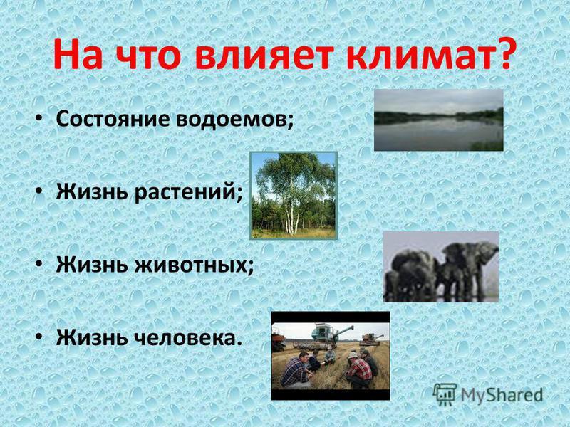 На что влияет климат? Состояние водоемов; Жизнь растений; Жизнь животных; Жизнь человека.