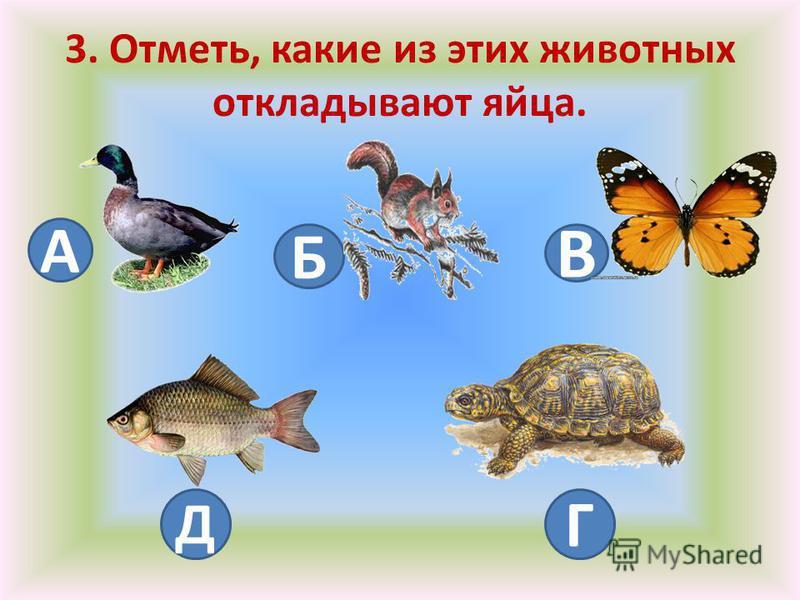 3. Отметь, какие из этих животных откладывают яйца. А Б В Д Г