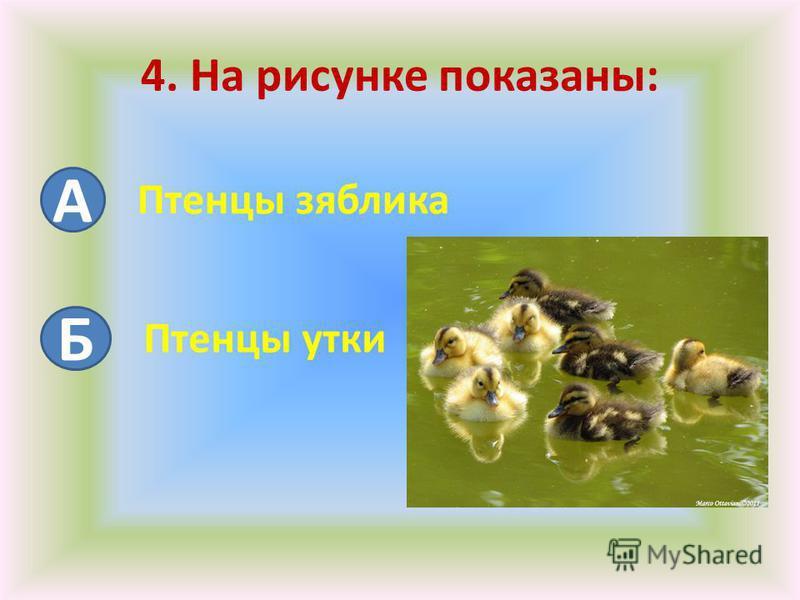 4. На рисунке показаны: А Б Птенцы зяблика Птенцы утки