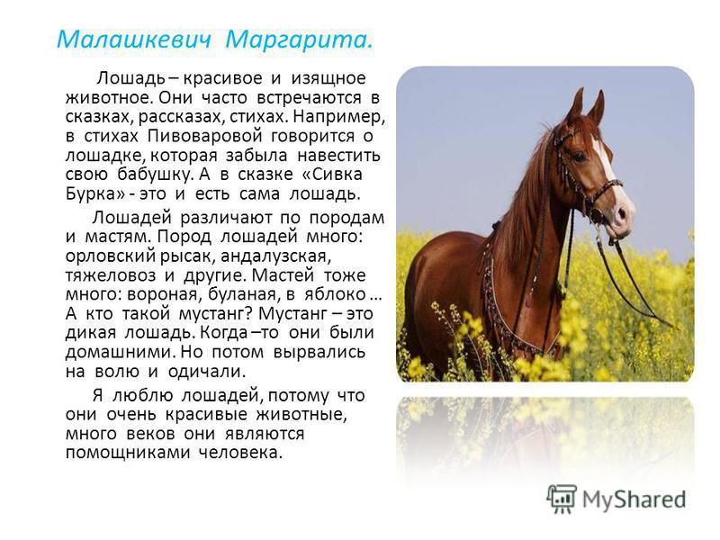 Малашкевич Маргарита. Лошадь – красивое и изящное животное. Они часто встречаются в сказках, рассказах, стихах. Например, в стихах Пивоваровой говорится о лошадке, которая забыла навестить свою бабушку. А в сказке «Сивка Бурка» - это и есть сама лоша
