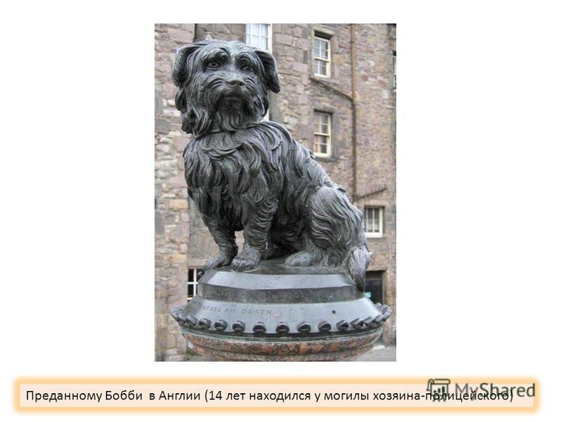 Преданному Бобби в Англии (14 лет находился у могилы хозяина-полицейского)