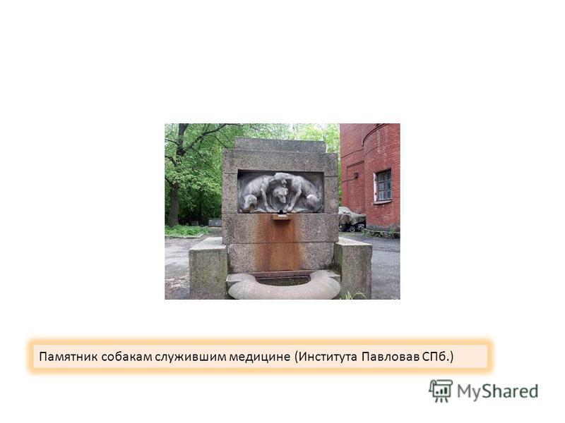 Памятник собакам служившим медицине (Института Павловав СПб.)