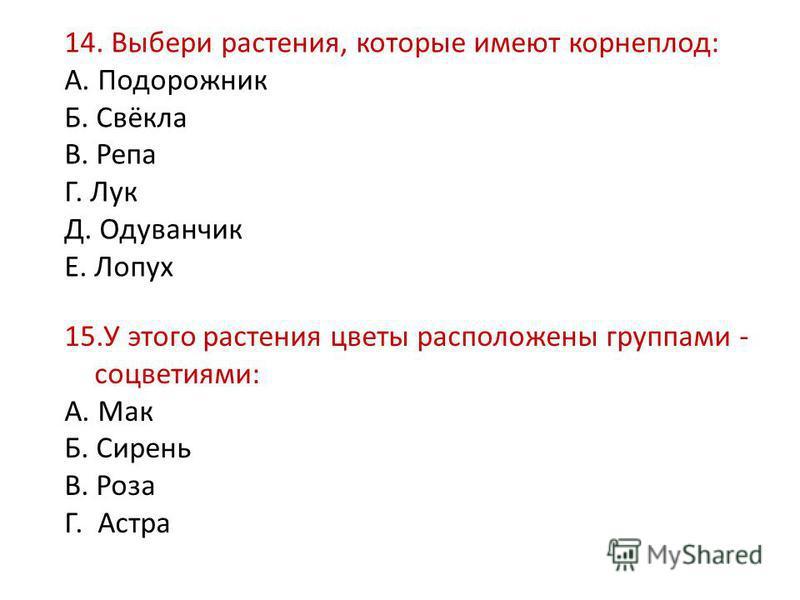 А. Подорожник Б. Свёкла В