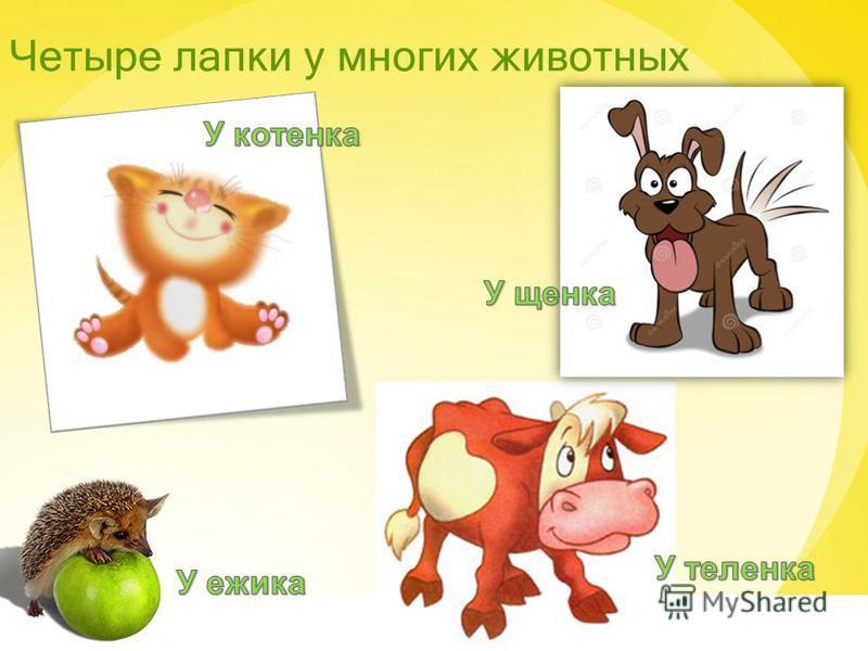 Четыре лапки у многих животных