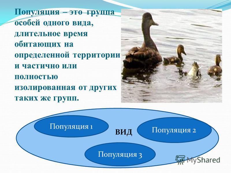 Популяция – это группа особей одного вида, длительное время обитающих на определенной территории и частично или полностью изолированная от других таких же групп. Популяция 1 Популяция 3 Популяция 2 ВИД