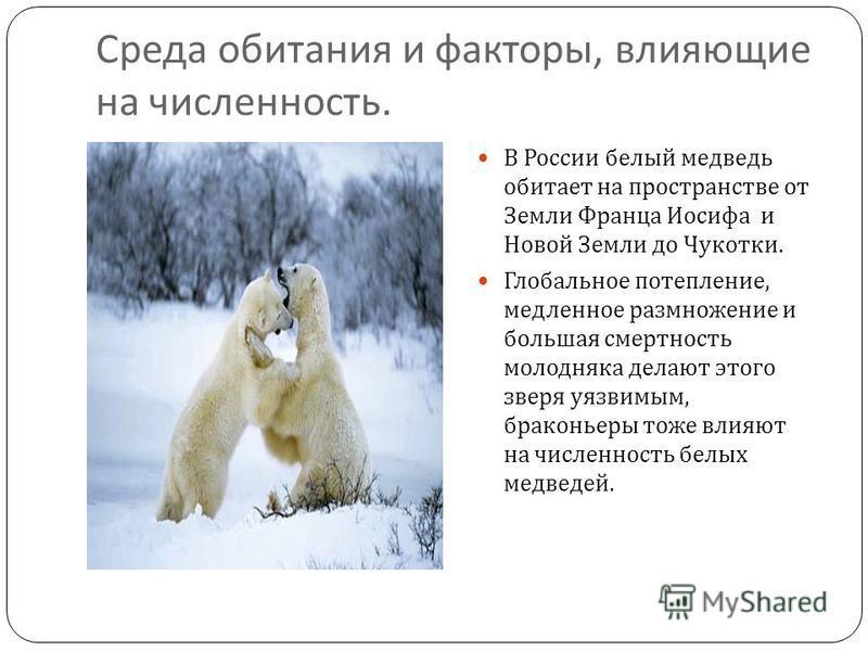 Среда обитания и факторы, влияющие на численность. В России белый медведь обитает на пространстве от Земли Франца Иосифа и Новой Земли до Чукотки. Глобальное потепление, медленное размножение и большая смертность молодняка делают этого зверя уязвимым