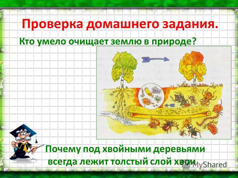Проверка домашнего задания. Кто умело очищает землю в природе? Почему под хвойными деревьями всегда лежит толстый слой хвои