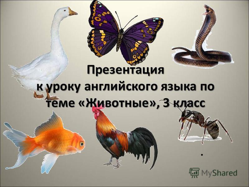 Презентация к уроку английского языка по теме «Животные», 3 класс.