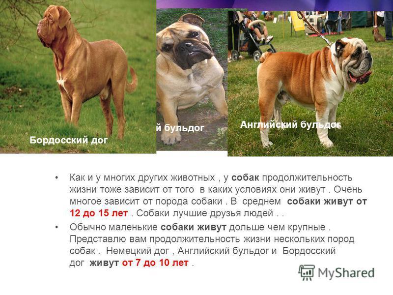 Собаки Как и у многих других животных, у собак продолжительность жизни тоже зависит от того в каких условиях они живут. Очень многое зависит от порода собаки. В среднем собаки живут от 12 до 15 лет. Собаки лучшие друзья людей.. Обычно маленькие собак