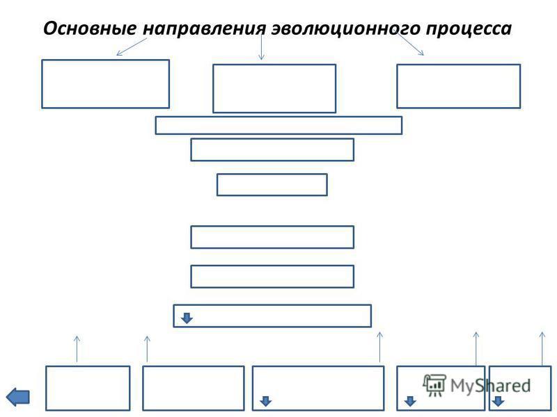 Основные направления эволюционного процесса