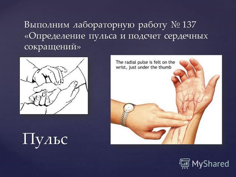 Выполним лабораторную работу 137 «Определение пульса и подсчет сердечных сокращений» Пульс