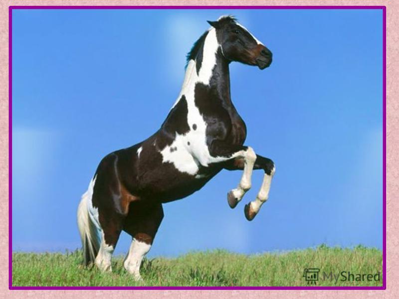 Лошадка скачать бесплатно mp3