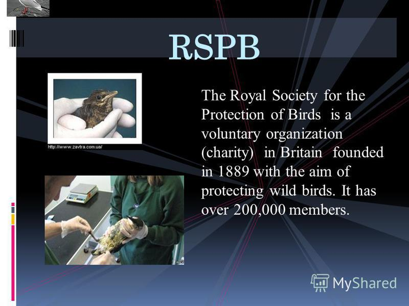 The Royal Society for the Protection of Birds is a voluntary organization (charity) in Britain founded in 1889 with the aim of protecting wild birds. It has over 200,000 members. RSPB
