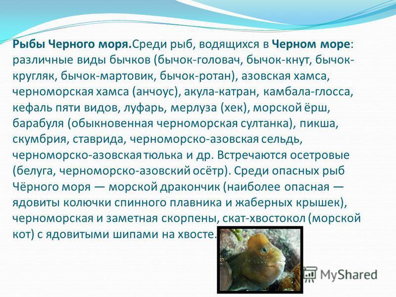 Рыбы Черного моря.Среди рыб, водящихся в Черном море: различные виды бычков (бычок-головач, бычок-кнут, бычок- кругляк, бычок-мартовик, бычок-ротан), азовская хамса, черноморская хамса (анчоус), акула-катран, камбала-глосса, кефаль пяти видов, луфарь