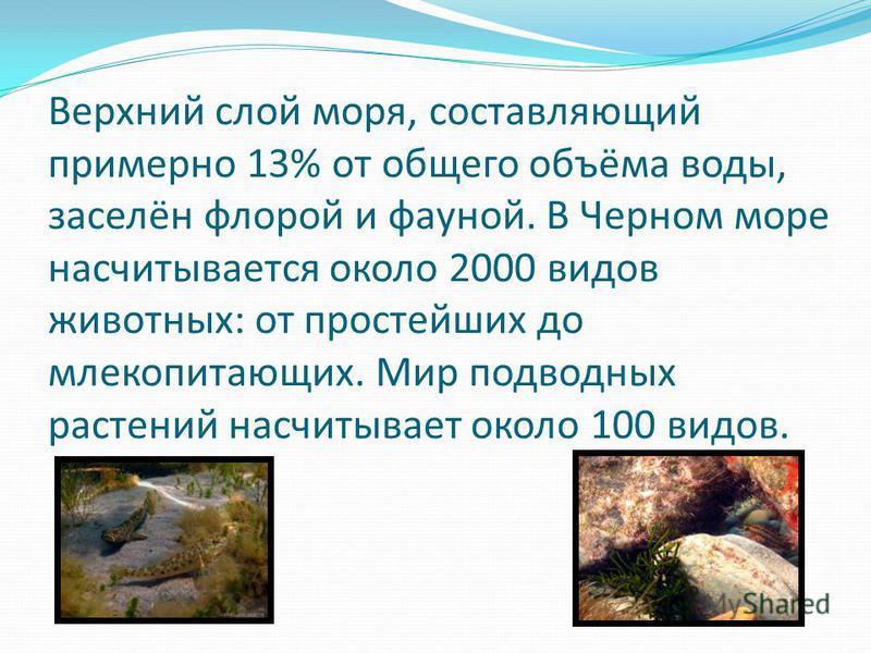 Верхний слой моря, составляющий примерно 13% от общего объёма воды, заселён флорой и фауной. В Черном море насчитывается около 2000 видов животных: от простейших до млекопитающих. Мир подводных растений насчитывает около 100 видов.