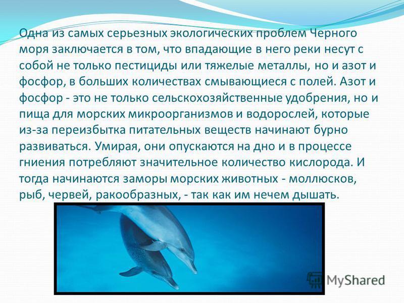 Одна из самых серьезных экологических проблем Черного моря заключается в том, что впадающие в него реки несут с собой не только пестициды или тяжелые металлы, но и азот и фосфор, в больших количествах смывающиеся с полей. Азот и фосфор - это не тольк