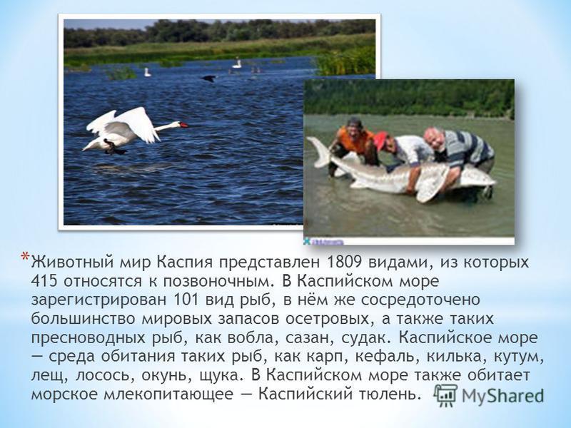 * Животный мир Каспия представлен 1809 видами, из которых 415 относятся к позвоночным. В Каспийском море зарегистрирован 101 вид рыб, в нём же сосредоточено большинство мировых запасов осетровых, а также таких пресноводных рыб, как вобла, сазан, суда