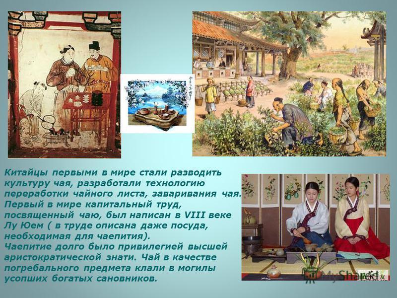 Китайцы первыми в мире стали разводить культуру чая, разработали технологию переработки чайного листа, заваривания чая. Первый в мире капитальный труд, посвященный чаю, был написан в VIII веке Лу Юем ( в труде описана даже посуда, необходимая для чае