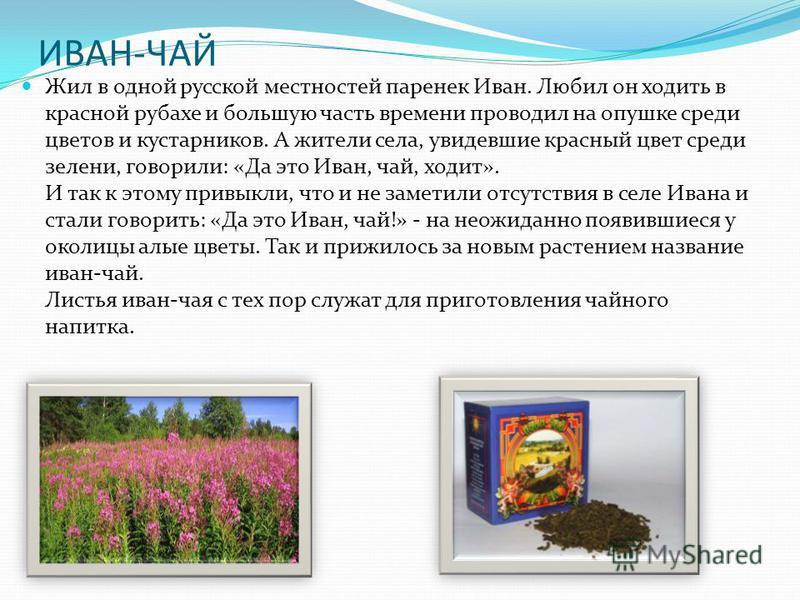 ИВАН-ЧАЙ Жил в одной русской местностей паренек Иван. Любил он ходить в красной рубахе и большую часть времени проводил на опушке среди цветов и кустарников. А жители села, увидевшие красный цвет среди зелени, говорили: «Да это Иван, чай, ходит». И т