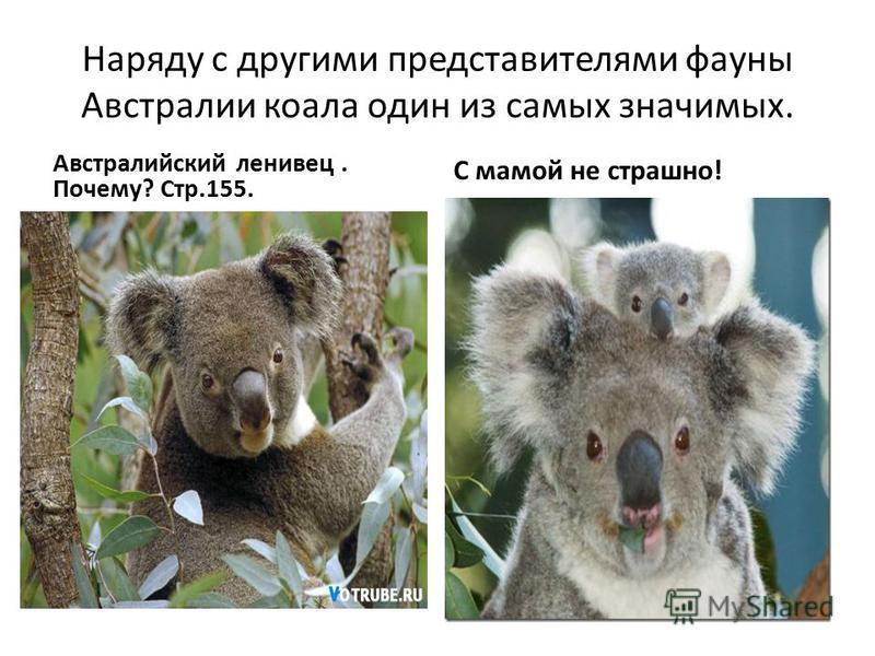 Наряду с другими представителями фауны Австралии коала один из самых значимых. Австралийский ленивец. Почему? Стр.155. С мамой не страшно!