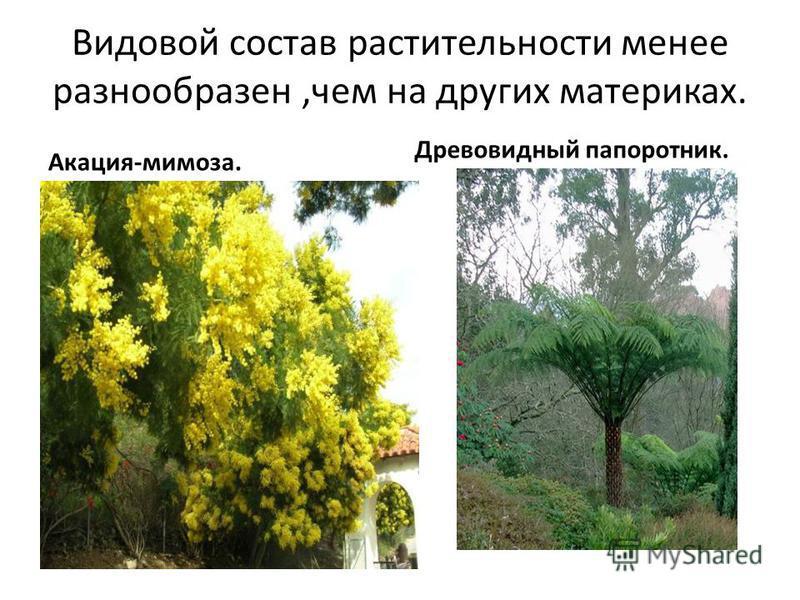 Видовой состав растительности менее разнообразен,чем на других материках. Акация-мимоза. Древовидный папоротник.