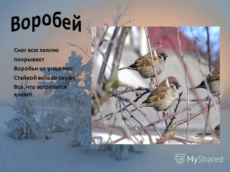 Снег всю землю покрывает Воробьи не унывают: Стайкой весело снуют, Все, что встретится клюют.