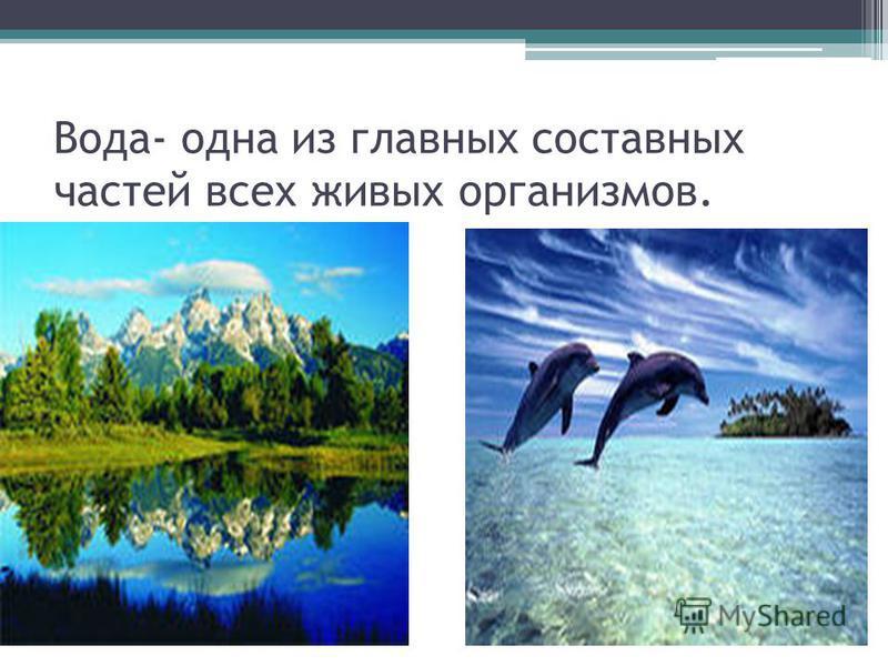 Вода- одна из главных составных частей всех живых организмов.