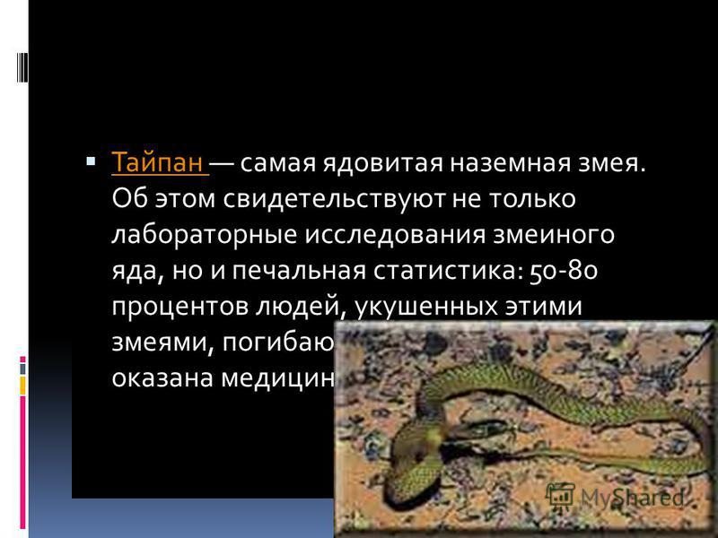 Самая ядовитая наземная змея Тайпан самая ядовитая наземная змея. Об этом свидетельствуют не только лабораторные исследования змеиного яда, но и печальная статистика: 50-80 процентов людей, укушенных этими змеями, погибают, если им вовремя не оказана