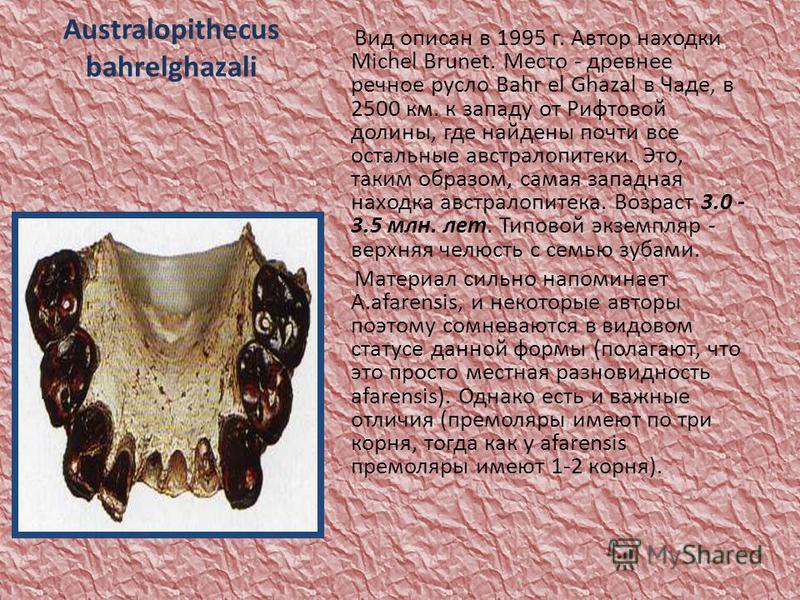 Australopithecus bahrelghazali Вид описан в 1995 г. Автор находки Michel Brunet. Место - древнее речное русло Bahr el Ghazal в Чаде, в 2500 км. к западу от Рифтовой долины, где найдены почти все остальные австралопитеки. Это, таким образом, самая зап