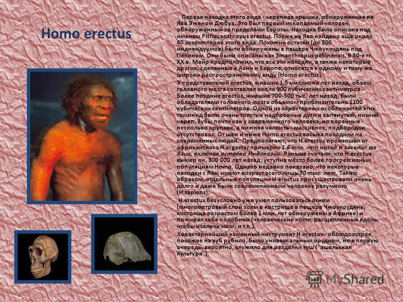 Homo erectus Первая находка этого вида - черепная крышка, обнаруженная на Яве Эженом Дюбуа. Это был первый ископаемый человек, обнаруженный за пределами Европы. Находка была описана под именем Pithecanthropus erectus. Позже на Яве найдено еще около 4