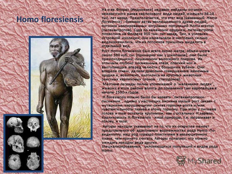 Homo floresiensis На о-ве Флорес (Индонезия) недавно найдены останки неизвестного ранее карликового вида людей, жившего 38-18 тыс. лет назад. Предполагается, что этот вид (названный Homo floresiensis) - боковая ветвь эволюционного древа людей, потомо