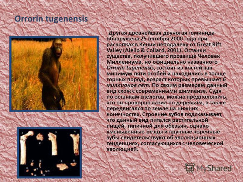 Orrorin tugenensis Другая древнейшая двуногая гоминида обнаружена 25 октября 2000 года при раскопках в Кении неподалеку от Great Rift Valley (Aiello & Collard, 2001). Останки существа, получившего прозвище Человек Миллениума, но официально названного