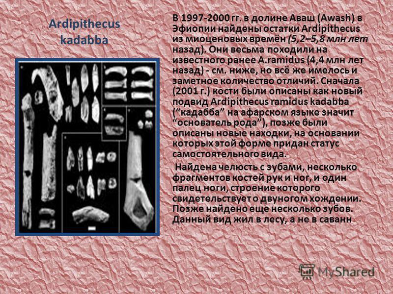 Ardipithecus kadabba В 1997-2000 гг. в долине Аваш (Awash) в Эфиопии найдены остатки Ardipithecus из миоценовых времён (5,2–5,8 млн лет назад). Они весьма походили на известного ранее A.ramidus (4,4 млн лет назад) - см. ниже, но всё же имелось и заме