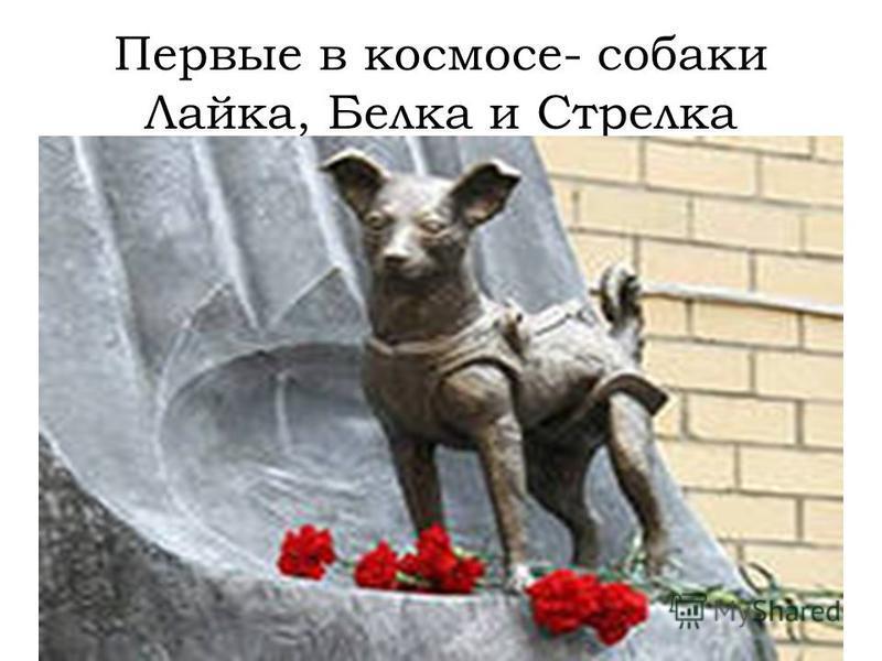 Первые в космосе- собаки Лайка, Белка и Стрелка